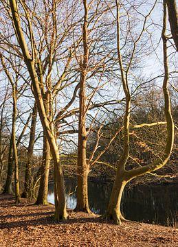 bomen aan het water van Compuinfoto .