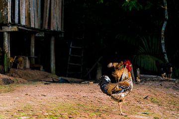 Tropischer Hahn im Amazonasgebiet von John Ozguc