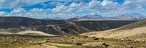 Kudde lama's op de hoogvlakte van de Andes, Peru van