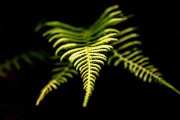 Natur hautnah erleben von MPhotographer