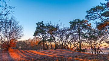 Nationaal Park De Loonse en Drunense Duinen von Dick van der Wilt