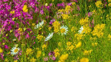 Wildblumen von Eva Masselink