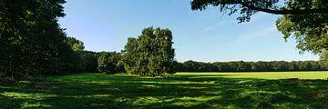 panorama van Drentscoulisselandschap van Wim vd Neut