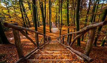 Herfst in Sonsbeek park Arnhem van Erik Keuker
