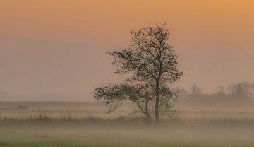 Orange misty morning sur Teo Goudriaan