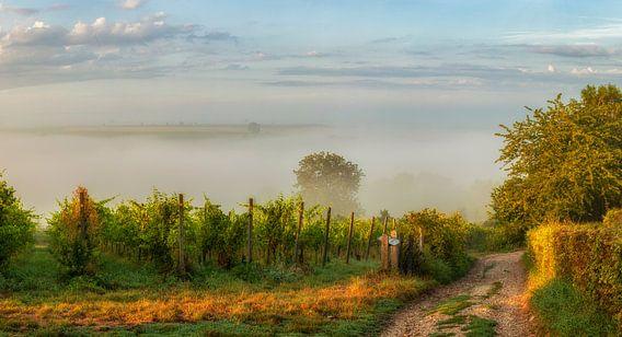 Een mistige zonsopkomst boven de heuvels in Zuid-Limburg