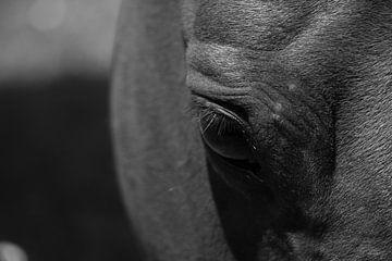 Pferd in schwarz-weiß von Sharleen Roijackers