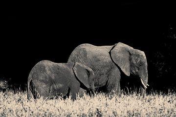 Elefant mit Jungtieren von Bart van Mastrigt
