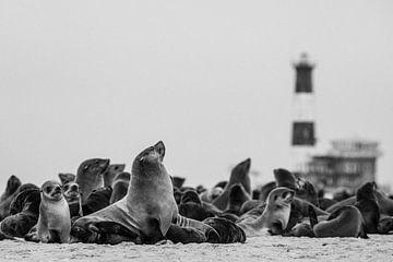 Kolonie pelsrobben / zeehonden in Namibië van Martijn Smeets