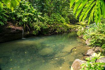 Op de rivier Lezarde, Guadeloupe, van Peter Schickert