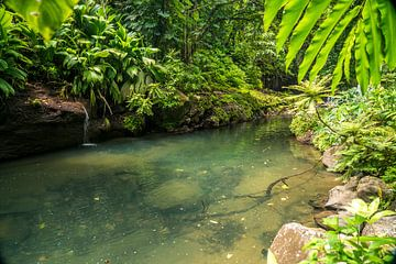 Op de rivier Lezarde, Guadeloupe,