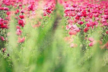 beauty through the grass...  van Els Fonteine