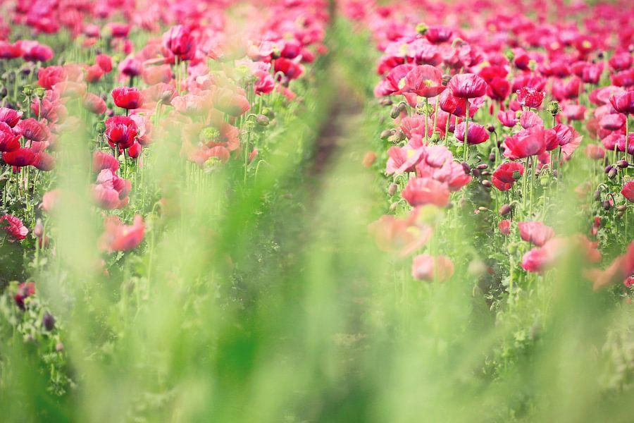 beauty through the grass...
