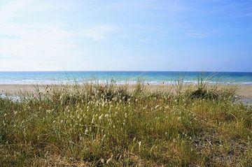 Sanddünen mit Seegraswiesen an einem Strand in Brittany France von