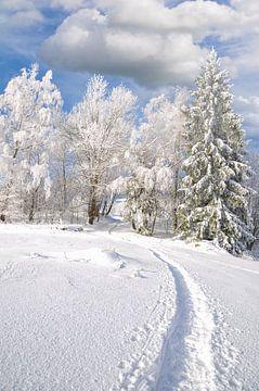 Winterlandschap in het Beierse Woud van Peter Eckert