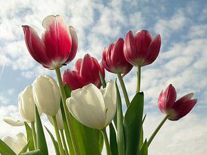 Tulpen Hemel