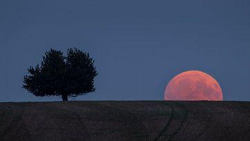 Genialer Mondaufgang von Ronny Rohloff