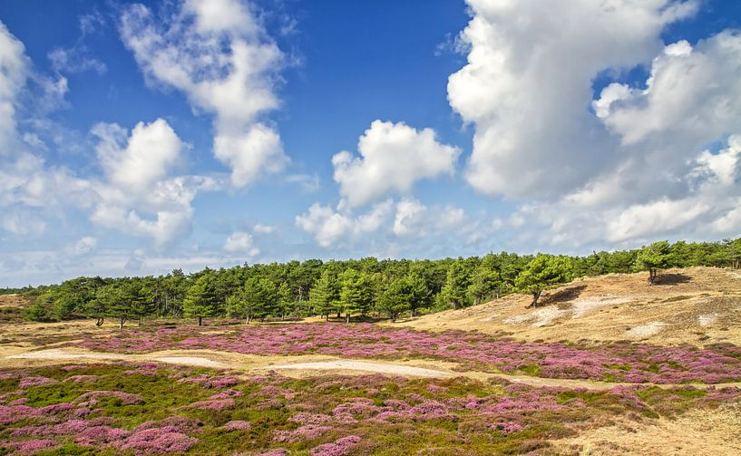 Heide in bloei op Texel / Heather in bloom on Texel. van Justin Sinner Pictures ( Fotograaf op Texel)