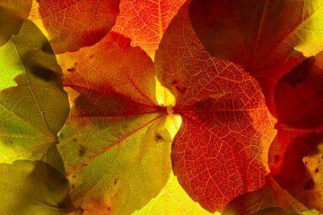 Herfstbladeren 19 van Henk Leijen