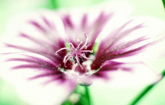 Love in Flowers van Ernst van Voorst