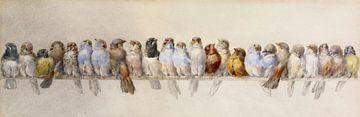 Ein Barsch von Vögeln, Hector Giacomelli