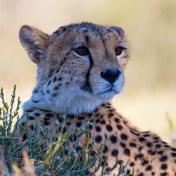 Mein Cheetah-Favorit von Linda van der Steen
