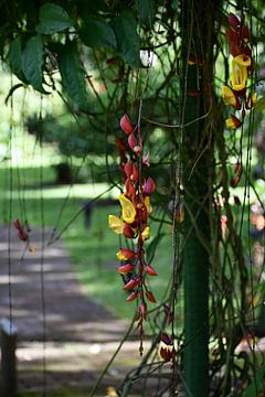 Prachtige hangende bloem, Costa Rica van Mirjam Welleweerd