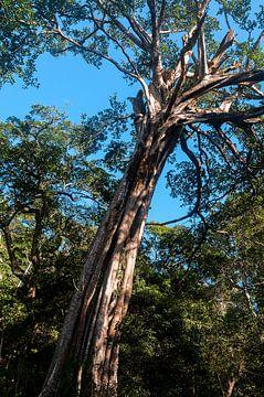 Costa Rica: Rincón de la Vieja Volcano National Park von Maarten Verhees