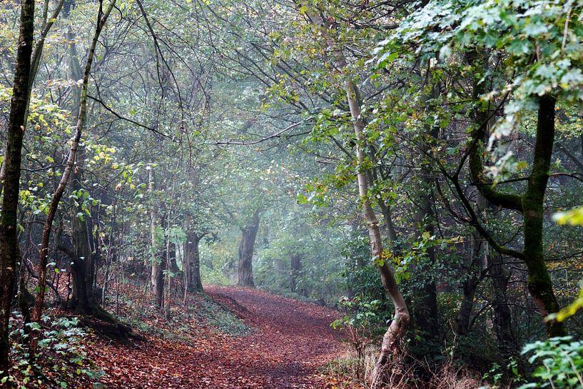 Een mistige ochtend in het bos van Wieland Teixeira
