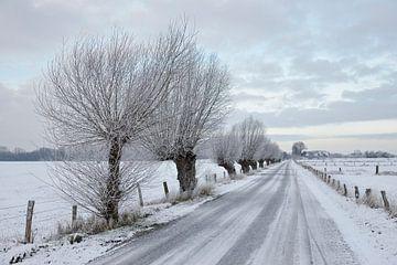 Kopfweiden, Kopfbäume stehen entlang einer verschneiten Straße, Bislicher Insel, Niederrhein von wunderbare Erde