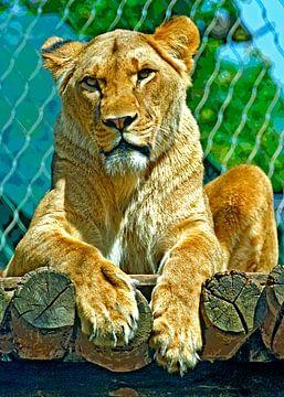 Femal lion van Leopold Brix