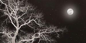 Nachtboom met maan
