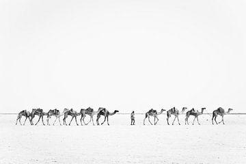 Caravane de chameaux dans une plaine salée en Éthiopie.