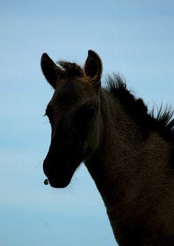 Silhouette van een konik paard von Saskia Hoks