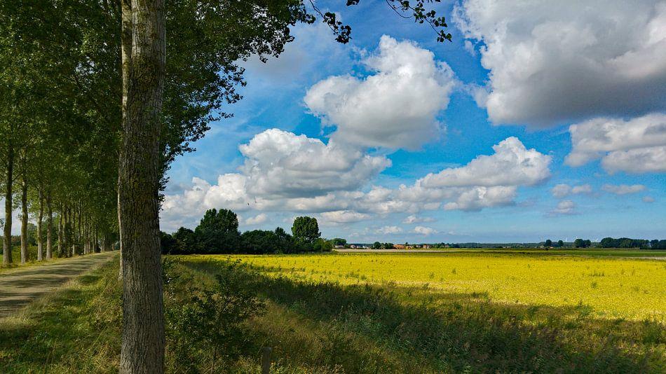Oude weg tussen Biervliet en Driewegen met uitzicht op de Helena polder van Anne Hana