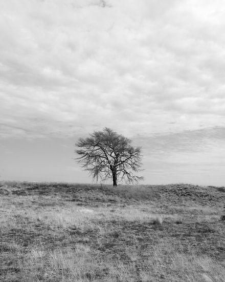 Eenzame boom van Menno Bausch