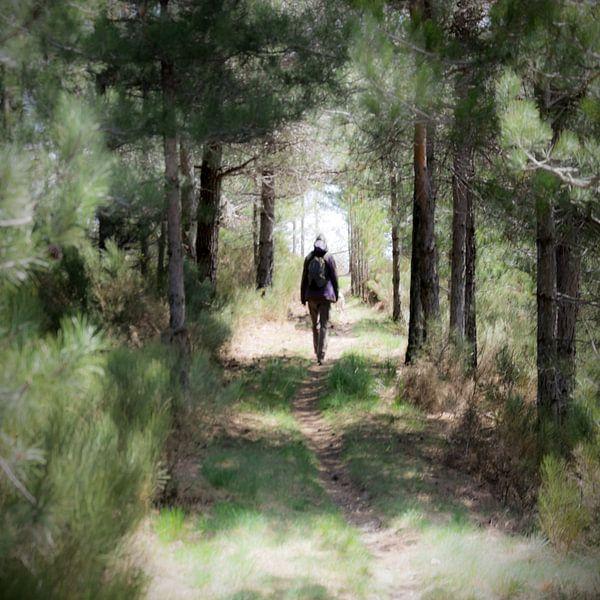 promenade sur Alain Ulmer