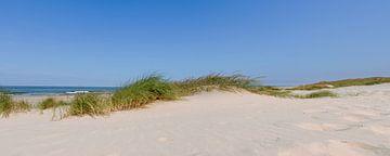 Dünen am Strand im Sommer von Sjoerd van der Wal