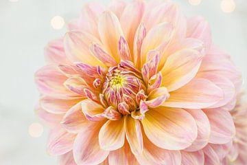 Roze dahlia van Nina van der Kleij