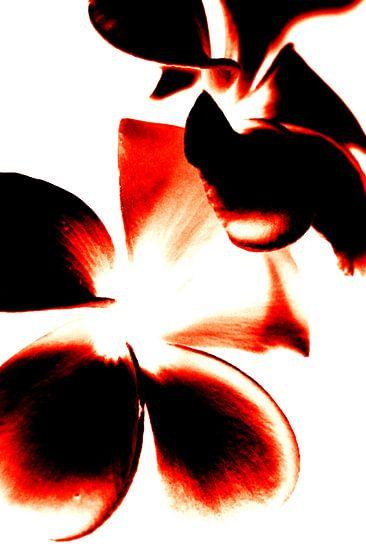Bloemen Contrast (Rood) van Ernst van Voorst