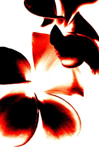Bloemen Contrast (Rood)