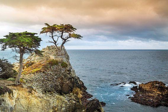Am meisten fotografierter Baum der Welt