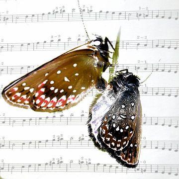 Liebesreigen van Christine Nöhmeier