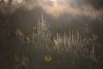Goldene Heide von Tania Perneel