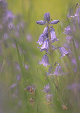Bluebells van Jacqueline Heemskerk