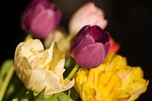 Boeket tulpen in paars en geel