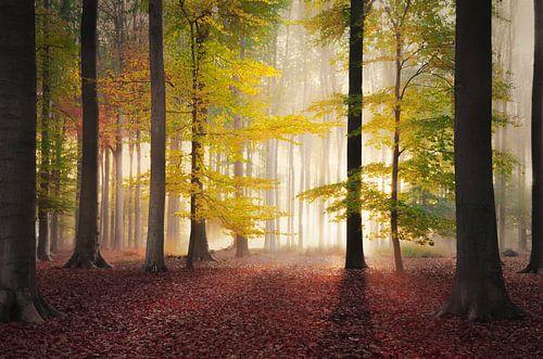 Alle herfstkleuren in een bos