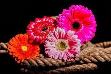 Blumen auf schwarzem Hintergrund von Liberty Ragazza Biesma