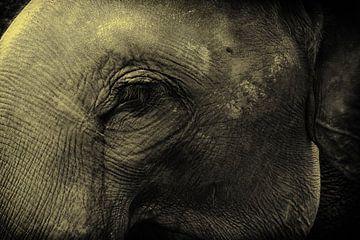 Close up van olifant