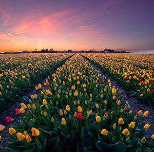 Kleurrijke tulpen... van Corné Ouwehand